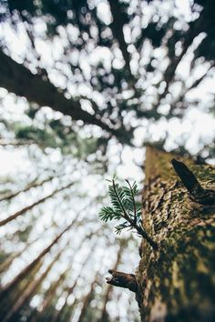 "elenamorelli: "" { vertigo in the woods } """