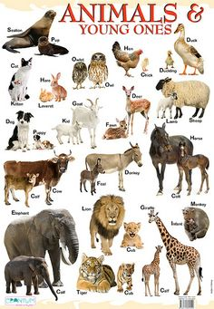 young ones of animals - Video Search Young Ones Of Animals, Animals Name List, Animals Name In English, Baby Animal Names, Young Animal, Farm Animals Preschool, Baby Farm Animals, Learn English Kid, English Study