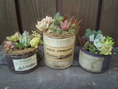 リメイク缶いっぱい。の画像 | Ψ ほぼ多肉日記 Ψ Succulents In Containers, Container Plants, Cacti And Succulents, Planting Succulents, Container Gardening, Succulent Gifts, Succulent Arrangements, Air Plants, Potted Plants