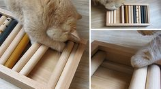 Bauen Sie mit uns ein individuelles Intelligenzspielzeug für Katzen & entdecken Sie, was in Ihrer Katze steckt ➲ zur Intelligenzbox für Katzen Bauanleitung