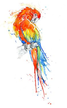 Parrot I - Scarlet Macaw    www.amyholliday.co.uk