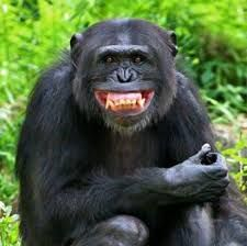 can't wait to get to montana. Smiling Animals, Animals And Pets, Funny Animals, Cute Animals, Laughing Animals, Primates, Ape Monkey, Baboon, Frases