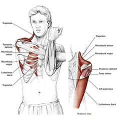 Easy Stretches to Release Tension in the Neck & Shoulders Shoulder Stretching Exercises, Neck And Shoulder Stretches, Back Pain Exercises, Neck And Shoulder Pain, Neck Pain, Shoulder Rehab, Muscle Stretches, Easy Stretches, Neck Stretches