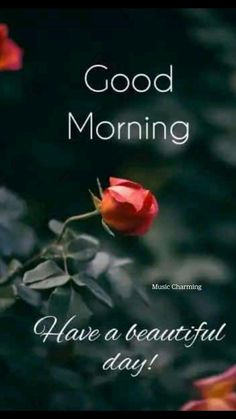 Morning Wishes Quotes, Good Morning Friends Quotes, Morning Quotes Images, Good Morning Cards, Good Morning Coffee, Morning Inspirational Quotes, Good Morning Picture, Good Morning Love, Good Morning Messages