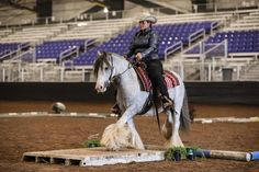 SD THE WINNING ONE Owned by PSRanch Shown by Katie Hembree Sd, Serenity, Ranch, Peace, Horses, Animals, Guest Ranch, Animales, Animaux