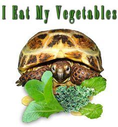 Tortoise - I Eat My Vegetables Tortoise, Vegetables, Eat, Design, Tortoise Turtle, Turtles, Vegetable Recipes, Veggies