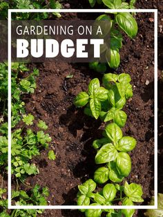 Gardening On a Budget - Homesteading and Health