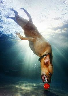 Dogs who love to swim! Who knew dogs were so cute underwater?   http://kudos.amazeworthy.com/20-dogs-who-love-to-swim