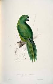 Platycercus) unicolor by Edward Lear on Curiator, the world's biggest collaborative art collection. Blue Bird Art, Parrot Painting, Edward Lear, Historia Natural, Picture Boxes, Bird Book, John James Audubon, Bird Illustration, Colorful Birds