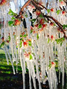 **The Beauty of Icicles!~A Treat to Behold