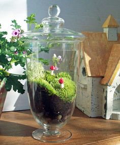 Apothacary Moss Terrarium. I never thought of growing a  moss garden indoors. I have had one outdoors for about 7 years but I love this idea.