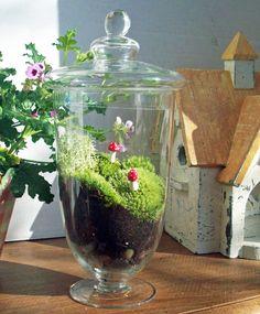 Apothacary Moss Terrarium