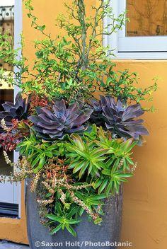 Succulent container with Crassula capitella Campfire, Graptopetalum parguayense,  Crassula corymbulosa, and Hesperaloe; David Feix Design