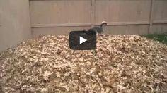 Hund spielt ausgelassen im Blätterhaufen