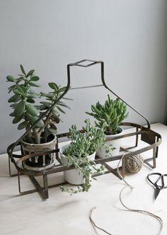 metal oil bottle carrier w/ succulents. potting ideas
