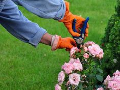 For far too long, I admit, I skimped on gardening gloves. I bought whatever was the cheapest variety and, as a result, my hands were often dirty and scratched after I spent time in my garden. In ad. Lawn And Garden, Garden Beds, When To Prune Roses, Pruning Roses, Gardening Magazines, Garden Pictures, Gardening Gloves, Garden Gifts, Lawn Care