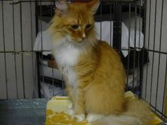 Urgently Needed is an adoptable Domestic Short Hair Cat in West Monroe, LA. The Shelter has an urgent need for CLAY (not clumping) litter. Frequently changing the clay litter keeps the odor down & hel... 4/15/2013