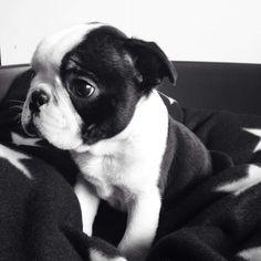 I am soooo ready for a puppy!!