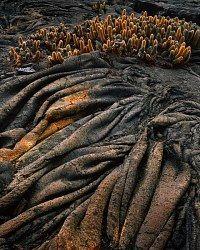Ropey lava flow.  Fernandina Island, Galapagos Islands, Ecuador