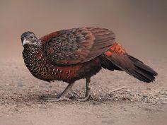 Bassi Wildlife Sanctuary - in Rajasthan, India