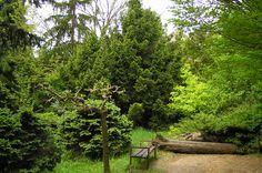 Slovakia, Mlyňany - Arboretum