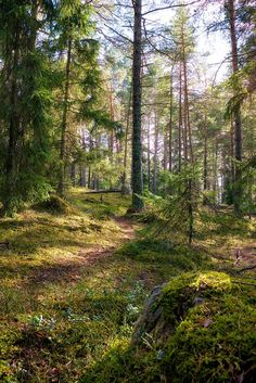fantastic Forest Outside of Stockholm, Sweden x Cool Landscapes, Beautiful Landscapes, Amazing Nature Photos, Beautiful Pictures, Forest Path, Beautiful Sky, Beautiful Places, Happy Trails, Walk In The Woods