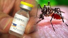 목포시, 일본뇌염 감염 주의 당부