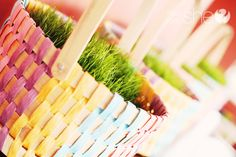 Grow your own Easter Grass. Mine is growing fast! It's not too late to plant.