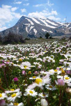 it's flowers time, #Kalavrita #spring #Greece