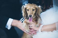Bridal Bliss Wedding: Such an adorable pup with a black and white striped bow to include in the celebration.