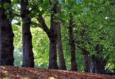 Trees in Castle Park. #bristol #nature