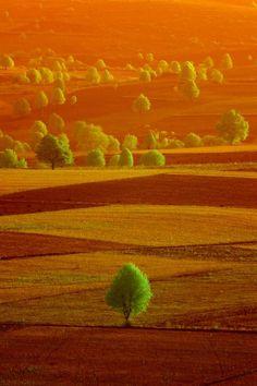 ⭐ orange green fields . landscape . 201606