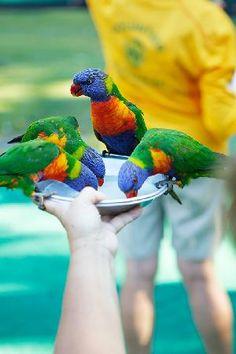 Curumbin wildlife sanctuary, Gold Coast, Queensland, Australia