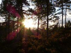 Et års Træning i Levende Nærvær   17. September 2014 - 14. juni 2015 - EN ETÅRIG TRÆNING, fordelt på 5 x 4 dages retreats i smukke Dalsland i Sverige, der giver mulighed for en dyb udviklingsproces i trygge rammer og med tid til fordybelse og udforskning.