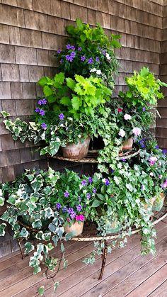 Nantucket by Design 2018 - Quintessence Porch Plants, Planter Garden, Flower Containers, Nantucket, Garden Styles, Container Gardening, House Tours, Flower Arrangements, Highlights