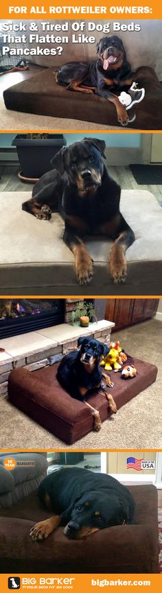 Rottweiler dog beds by Big Barker... America's most luxurious dog bed for big dogs like Rottweilers... over 1,000 Five Star Reviews on Amazon! | See more pictures at bigbarker.com