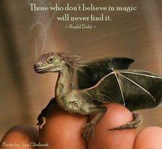 """Those who don't believe in magic will never find it.""  Roald Dahl"
