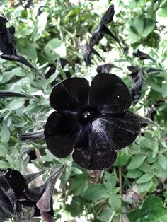 black flower. natural. supernatural.