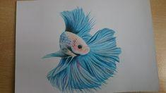 Betta fish-color pencil