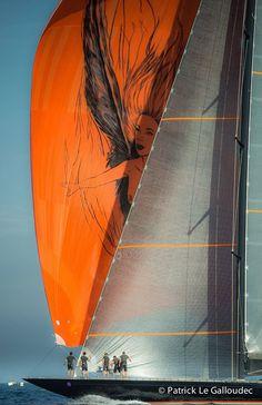 seatechmarineproducts:  Sailing