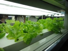 agri-cube compact hydroponic unit produces 10,000 vegetables per year in the space of a single car park - DigInfo TV