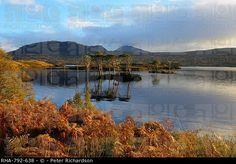 Evening sunlight, Loch Assynt, National Nature Reserve, Sutherland, Highlands, Scotland, United Kingdom, Europe