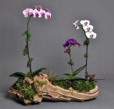 Best Orchid Arrangements With Succulents And Driftwood - Decomagz - Orchideen Orchid Terrarium, Orchid Planters, Orchids Garden, Succulents Garden, Planting Flowers, Terrarium Ideas, Patio Planters, Flowering Plants, Hanging Planters