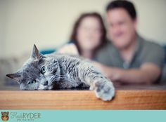 engagement picture with cat - Google Search