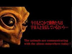こんな都市伝説を聞いたことがありませんか?-宇宙人と交信する動物たち-/Urban Legend -Animals communicate with aliens.-  http://www.timein.jp/item/content/movie/980197041