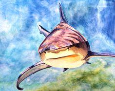 23408-shark_wip4.jpg 521×414 pixels