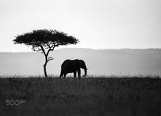 ELLIE SILHOUETTE - A lone elephant, Maasai Mara, Kenya.