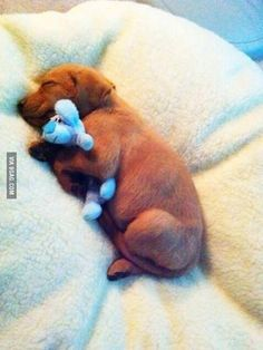 snuggles! #cute #puppy #sleeping
