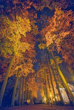 Gypsy Autumn Romance| Serafini Amelia| Autumn Night, Netherlands