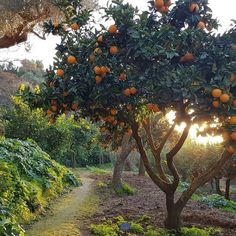 Beautiful World, Beautiful Places, Italian Summer, European Summer, Nature Aesthetic, Aesthetic Green, Northern Italy, Dream Garden, Monet